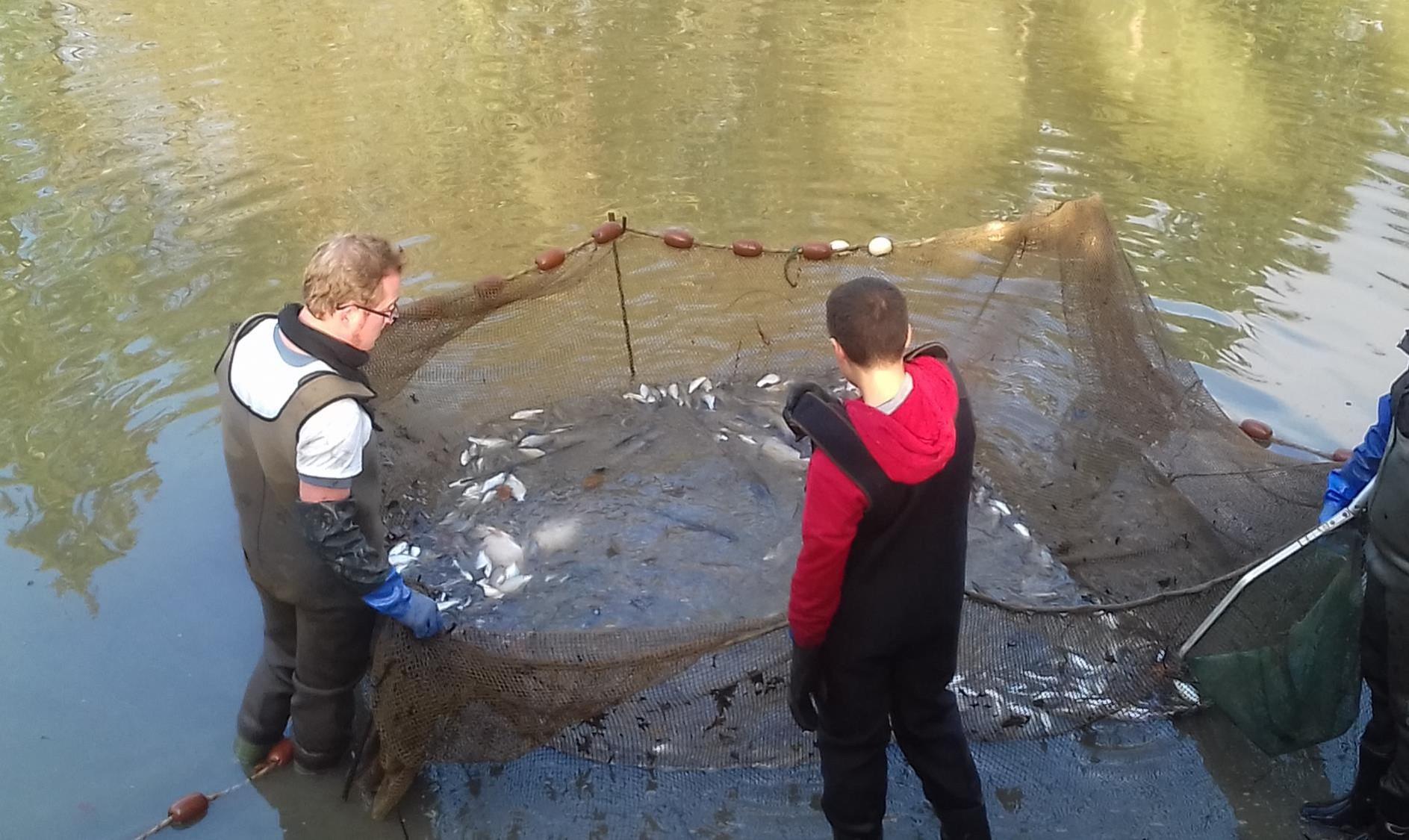 Pêche lors de la vidange du pland d'eau des Hunaudières - décembre 2018 - Bassin de l'Oudon