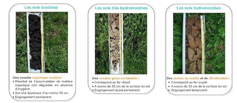 Extrait Guide d'identification des zones humides (SAGE Mayenne – 2009)