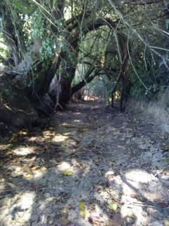 Ruisseau de la Masse à Loiré - 29/07/2019
