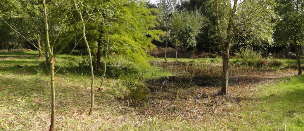 Forêt humide et secrète